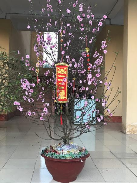 Cây đào đón xuân chúc mừng năm mới 2019 tại trường THCS Tân Hương.